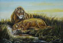 Lions at the water hole